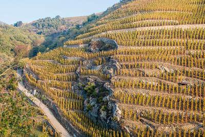 Ampuis parcelle de cote rotie les vignobles septentrionaux route des vins des cotes du rhone