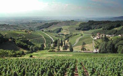 Chiroubles route des vins du beaujolais rhone