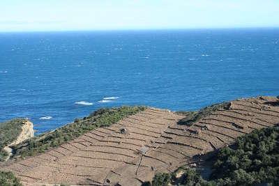 Collioure vignobles route des vins en albere guide du tourisme des pyrenees orientales