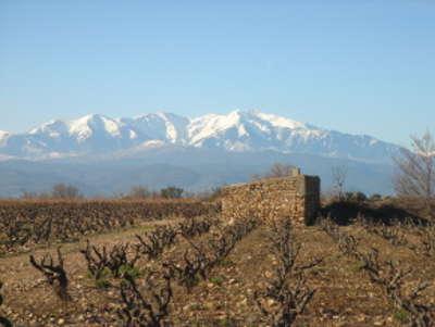 Corneilla la riviere route des vins en roussillon guide du tourisme dans les pyrenees orientales