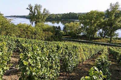 Coteaux du giennois route des vins du vignobles de l orleanais coteaux du giennois
