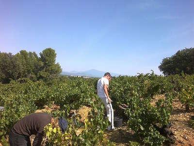 Courthezon route des vins du cote du rhone autour d avignon