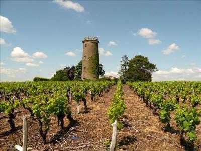 Haye fouassiere la route des vins entre ocean et champtoceaux pays nantais guide du tourisme de loire atlantique