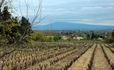 Jonquerettes route des vins du cote du rhone autour d avignon 1