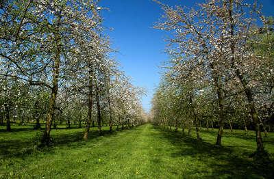 La route du poire les poiriers en fleurs guide du tourisme de l orne normandie