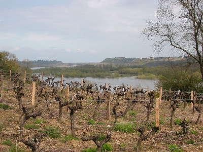 Le cellier route des vins d anjou panorama de loire guide du tourisme de maine et loire