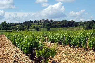 Le terroir de galets roules de chateauneuf du pape route des vins des cotes du rhone