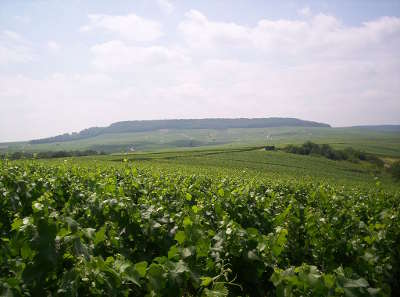 Le vignoble de la cote des blancs et la butte de saran vus depuis les hauteurs de chouilly route touristique du champagne cote des bar