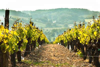 Les vignobles route des vins du val de loire la vallee du loir guide du tourisme de loir et cher