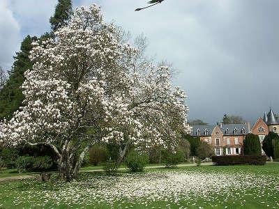 Magnolia devant le chateau du parc de balaine jardins remarquables routes touristiques de haute loire guide touristique auvergne