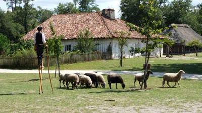 Marqueze l ecomusee de la grande lande route touristique des landes guide du tourisme nouvelle aquitaine