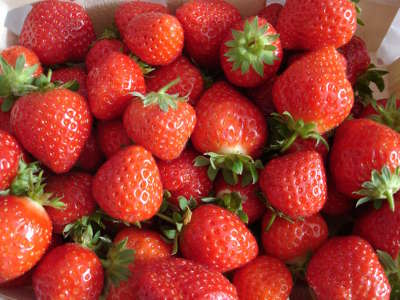 Route de la fraise de plougastel tourisme dans le finistere