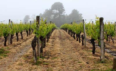Route des vignobles de l ile d olerons