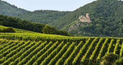 Route des vins d alsace guide du tourisme de l alsace