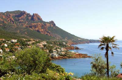 Route du mimosa guide du tourisme paca