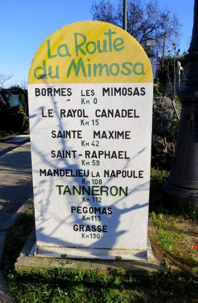 Route du mimosa guide du tourisme provence alpes cote d azur