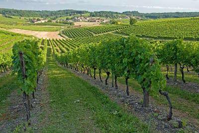 Route du vignoble de cognac