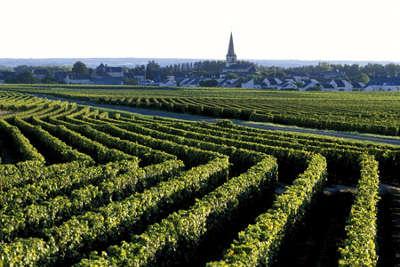 Saint nicolas de bourgeuil route des vins de tourraine rive droite entre saumur et chenonceaux