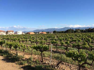 Saleilles route des vins en roussillon guide du tourisme dans les pyrenees orientales