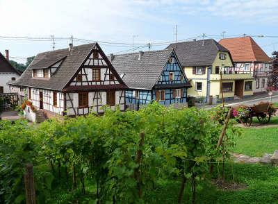 Soufflenheim maisons a colombage et vigne sur la route des potiers dans le bas rhin routes touristiques en alsace