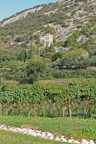 Sur la commune de beaumes de venise au pied des dentelles de montmirail entouree par les vignes l eglise notre dame d aubune route des vins des cotes du rhone