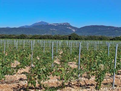 Travaillan vignoble du plan de dieu route des vins d orange a vaison la romaine