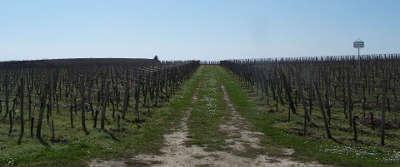 Vignes du chateau canon route du patrimoine route des vins de bordeaux guide du tourisme de la gironde aquitaine