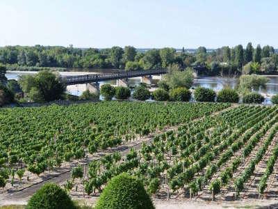 Vignoble de pouilly sur loire route des vignobles de pouilly