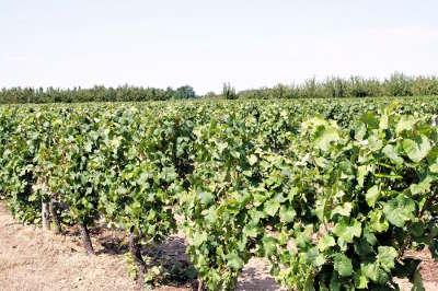 Vignoble route des vins du vignobles de l orleanais coteaux du giennois