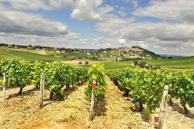 Vignobles route des vignobles de sancerre