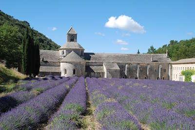 Abbaye de senanque routes touristiques du vaucluse guide du tourisme de provence alpes cote d azur