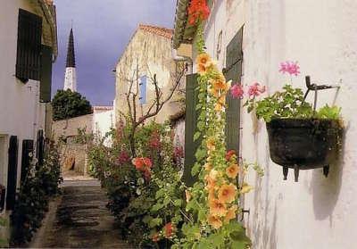 Ars en re plus beau village ruelle fleurie les routes touristique de charente maritime guide du tourisme poitou charente