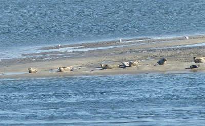 Baie de somme grand site de france phoques routes touristique de la sommes guide touristique de picardie