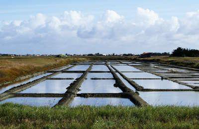 Beauvoir sur mer marais salants routes touristiques de vendee du tourisme du pays de la loire