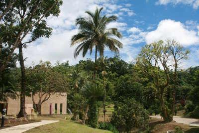 Domaine emeraude parc naturel regional de la martinique guide du tourisme