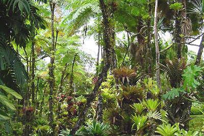 Foret tropicale martinique parc naturel regional de la martinique guide du tourisme en martinique