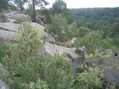 Foret vue des gorges de franchard parc naturel regional du gatinais francais guide du tourisme de la seine et marne ile de france