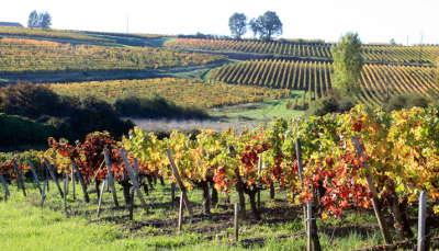 La rochelle bourg sur gironde route des coteaux route des vins de bordeaux guide de tourisme de la gironde aquitaine