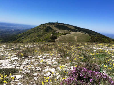 Le mourre negre dans le luberon routes touristiques du vaucluse guide du tourisme de provence alpes cote d azur