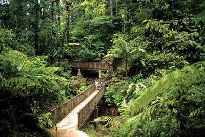 Le parc national de la guadeloupe guide du tourisme de basse terre guadeloue