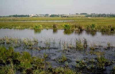 Le parc naturel regional du marais poitevin la venise verte guide du tourisme du poitou charente