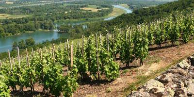 Le parc naturel regional du pilat les vigne guide touristique de rhone alpes