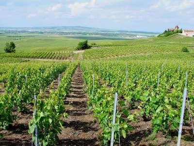Le vignoble de champagne a verzenay parc naturel regional de la montagne de reims guide du tourisme de la marne
