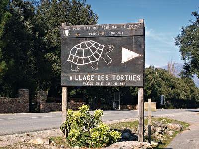 Le village des tortues de moltifau parc naturel regional de corse guide du tourisme de la corse