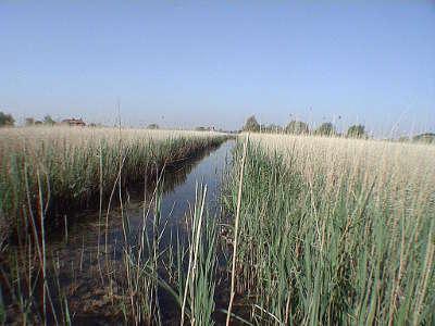Marais audomarois reserve de biosphere vue du romelaere watergang et roseliere guide touristique du nord pas de calais