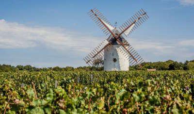 Mareuil sur lay dissais vignobles routes touristiques de vendee du tourisme du pays de la loire