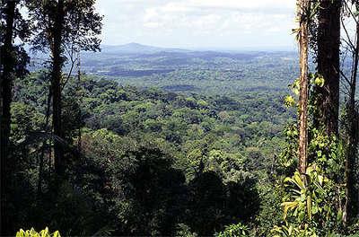 Ocean vert dans le parc naturel regional de la guyane guide du tourisme en guyane