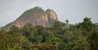 Parc national de guyane pic coudreau