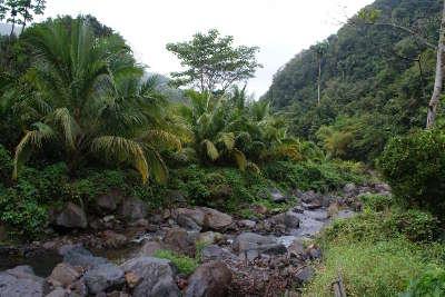 Parc national de la guadeloupe guide du tourisme de basse terre guadeloue