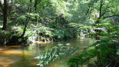 Parc naturel regional des landes de gascogne aysage des vallees de la leyre routes touristiques du teritoire de belfort guide du tourisme de franche comte